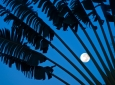 stock-palms